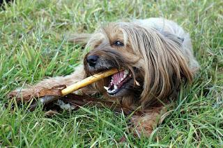 犬 咀嚼 クチャラー